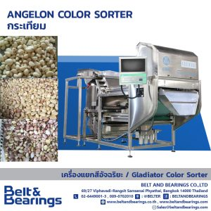 GARLIC ANGELON COLOR SORTER